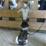 Puppysocialisatie